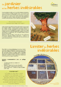 fiche-herbes-indesirables-1