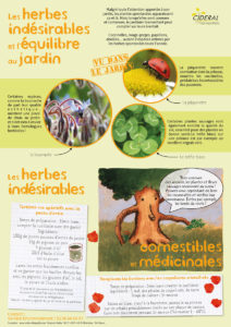 fiche-herbes-indesirables-2