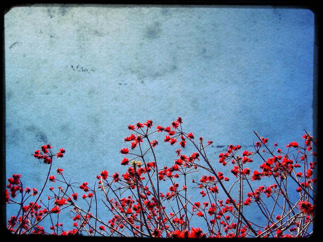 fleur-espagne